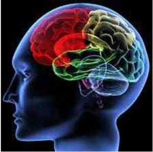 glava_sustav